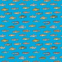 FISH_DOT2_B3