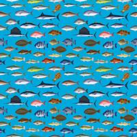 FISH_1_B3