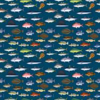 FISH_1_B4