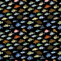 FISH_2_K