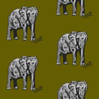 ELEPHANT_1C_G1