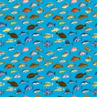 FISH_2_B3