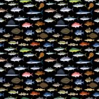 FISH_1_K